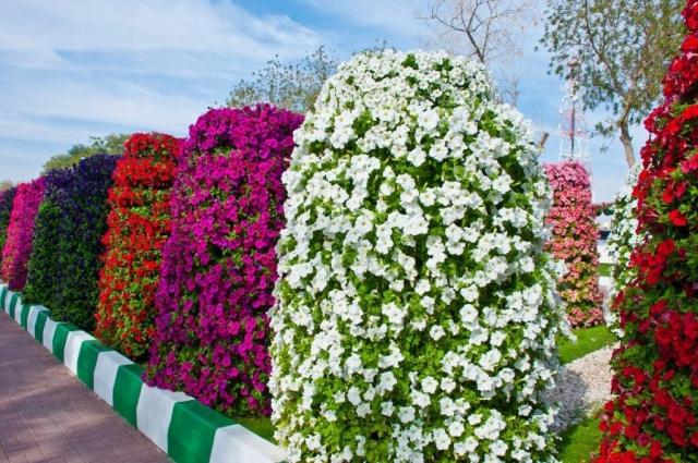 Колонны из цветов.