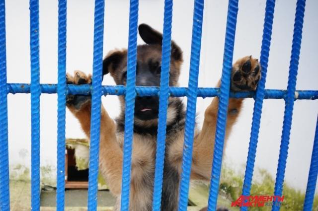 Первые месяцы жизни щенки живут в общих вольерах, а затем их переводят в персональные и начинают обучать премудростям будущей службы.