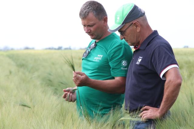 Система защиты пшеницы сработала хорошо.