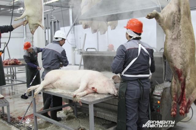На хладобойне в слободе Барило-Крепинской принимают в основном своих выращенных свиней и коров.