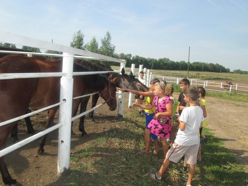 «Племенной конный завод им. В.И. Чапаева»
