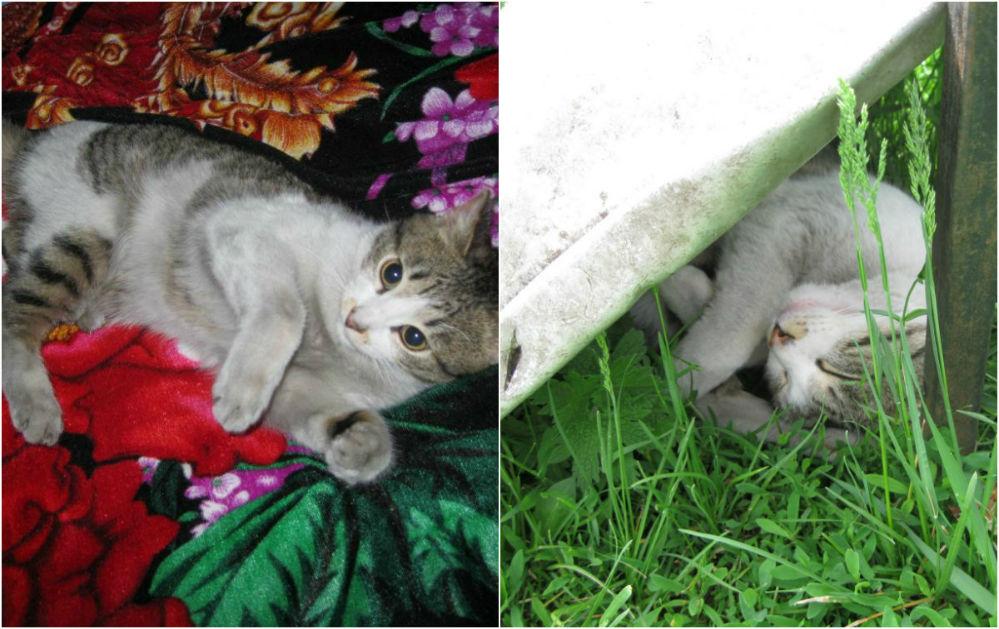 «Мои коты Джек (5 лет) и Фокс (2 года). Сначала они совсем не ладили друг с другом, а теперь они лучшие друзья».