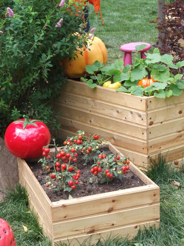 Мини-томаты– подходящее растение для цветника