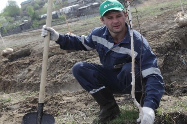 1500 деревьев высадят в Красноярске.