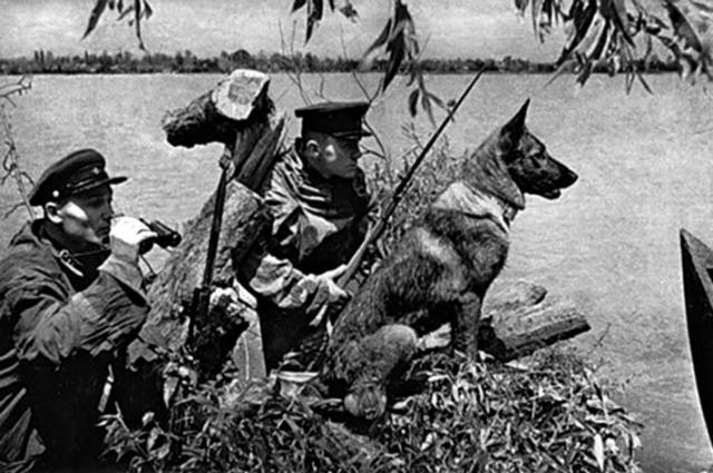 Собаки воевали наравне с бойцами Красной Армии.