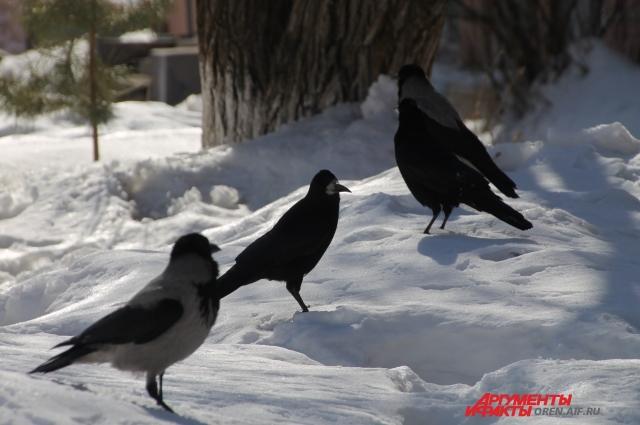 Зато солнцу радуются птицы!