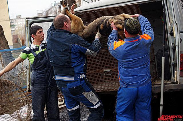 Все отловленные в городе безнадзорные животные отправляются в муниципальный приют.