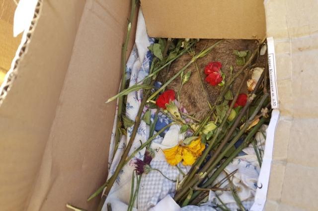 Женщина держала умерших животных в коробках на балконе.