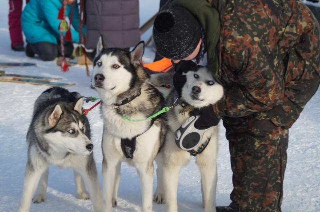 Хаски - очень дружелюбные собаки