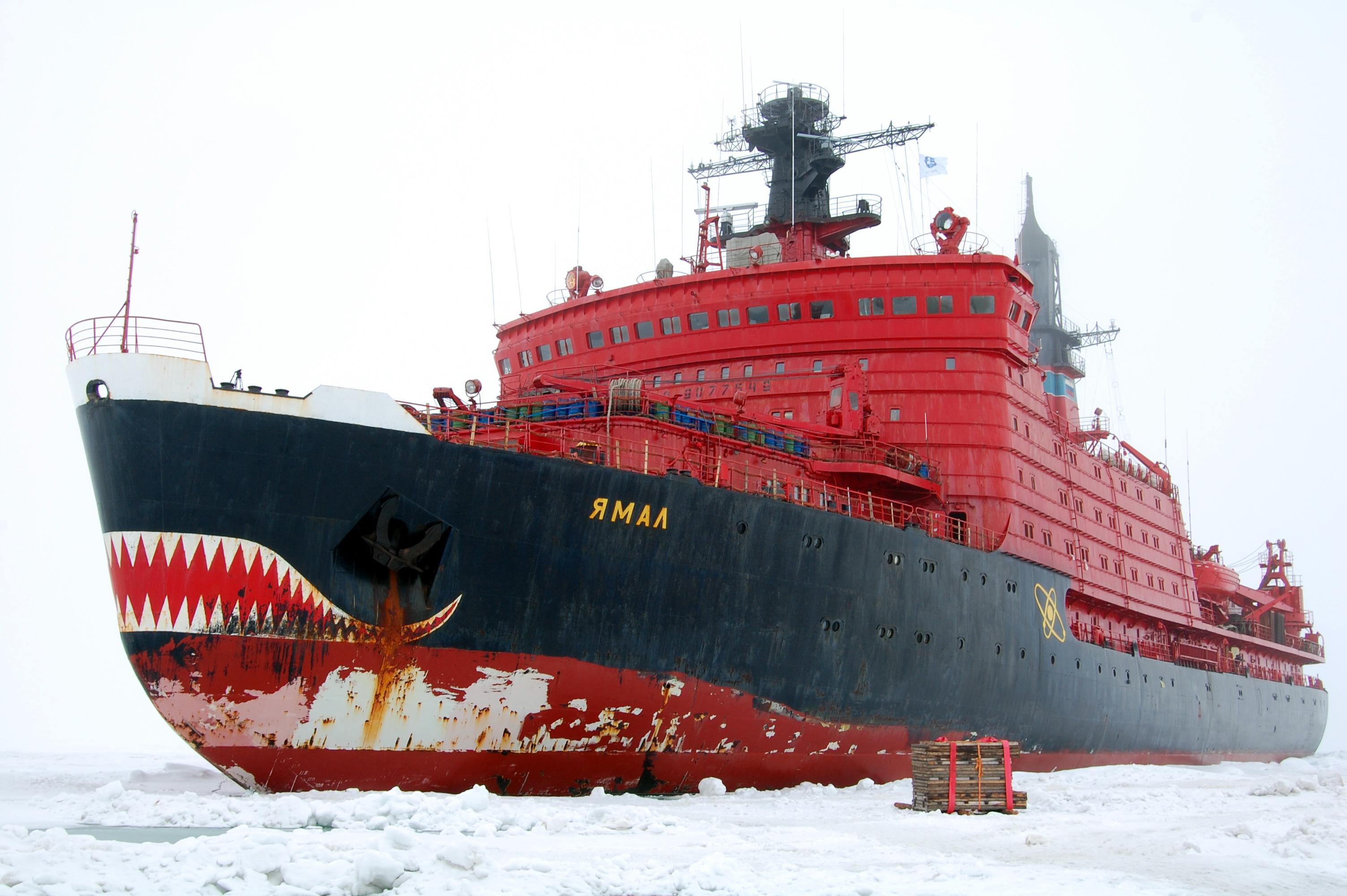 Среди бескрайних льдов Арктики сегодня закипела активная жизнь