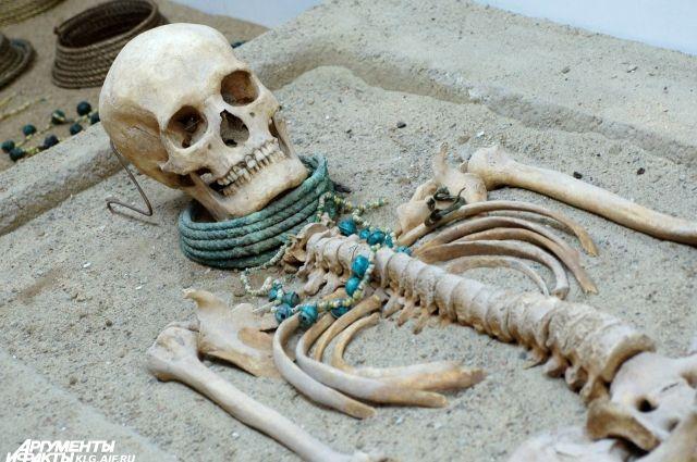 захоронение, скелет