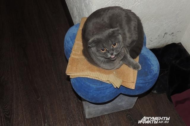 Когда кошка болеет, она не лежит на любимом пуфе, а прячется под кровать.