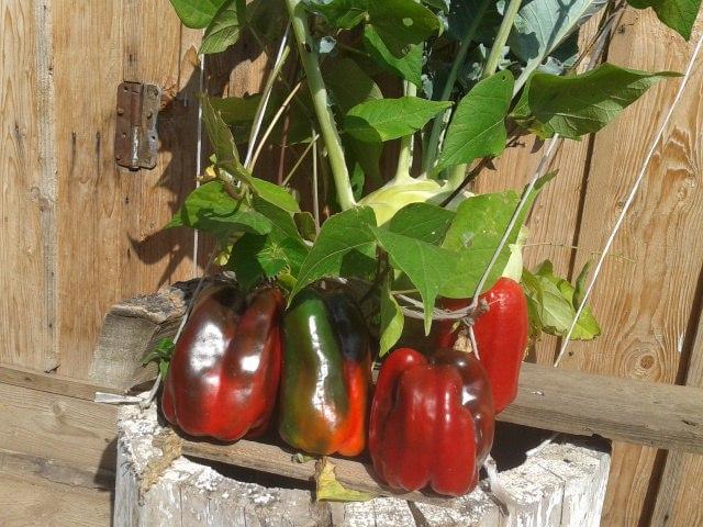 Чтобы вырастить полезные овощи, придется потрудиться.