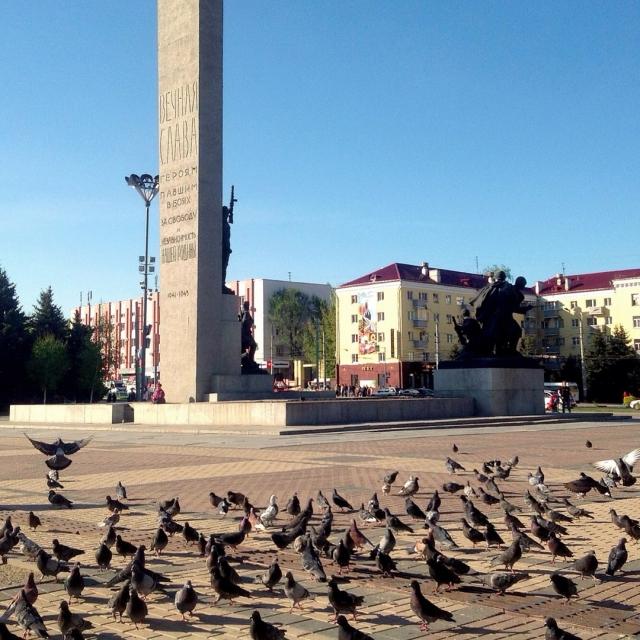 Птицам живется в Брянске хорошо.