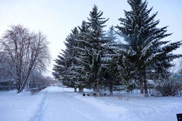 Зимой природа особенно красива.
