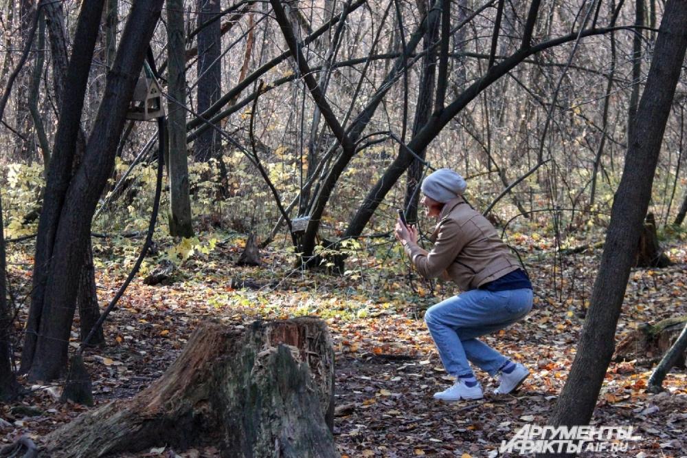 Кто-то старательно пытается запечатлеть обитателей городских лесов.