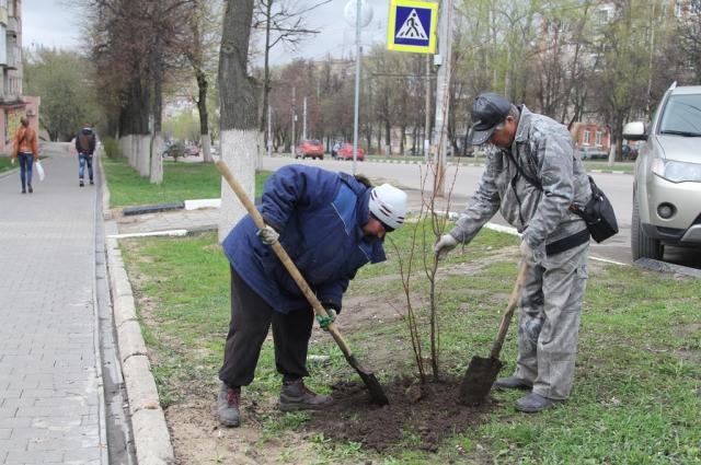 Посадка деревьев в Привокзальном округе.