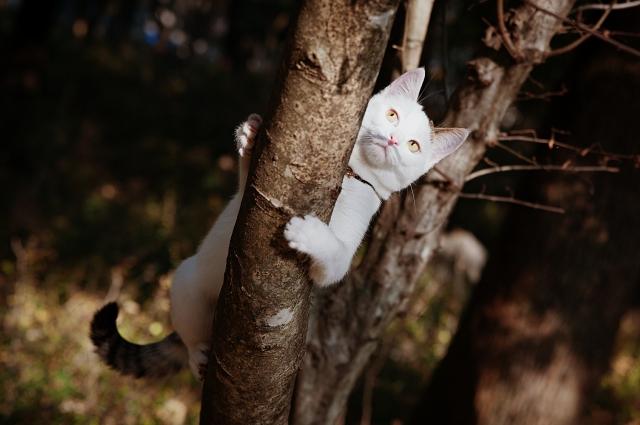 Одиссей - кот-путешественник