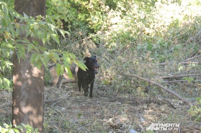 В поселке множество собак.