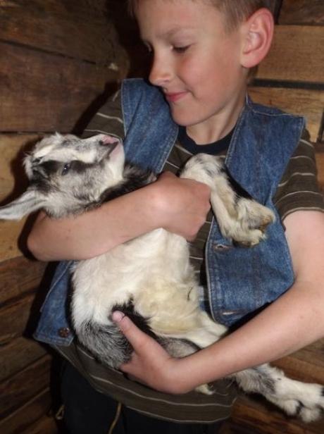 «Начиналось хозяйство с одной козы да грядки картошки».