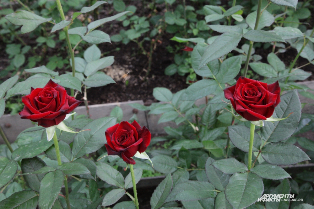 Чтобы летом любоваться цветником, нужно позаботиться о нём ещё весной.