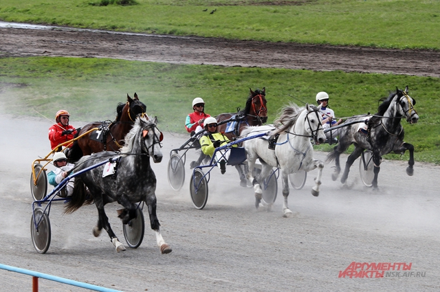 Самые быстрые лошади Сибири
