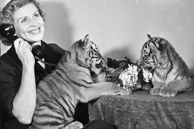 Укротительница тигров Маргарита Назарова с тигрятами. 1958 год