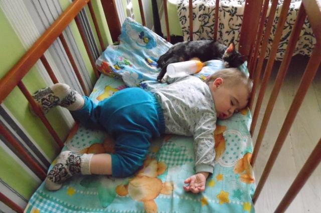 В семье Меньшиковых появился питомец - кошка Няшка.