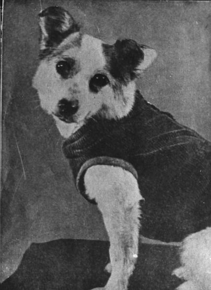 Собака-космонавт Звёздочка.