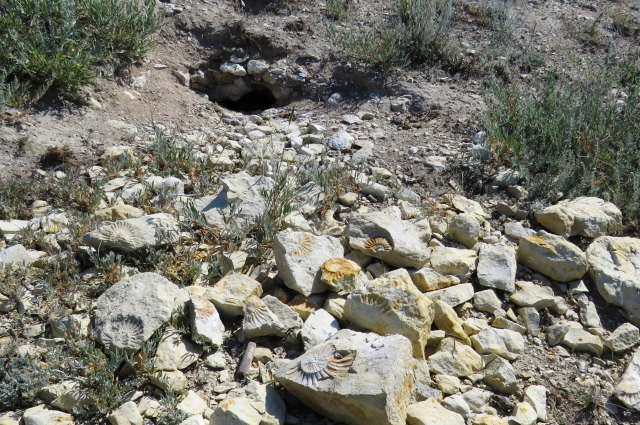 Сурчиная нора с палеонтологическими находками.
