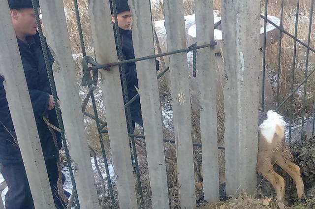Дикое животное спасали сотрудники МВД и МЧС.