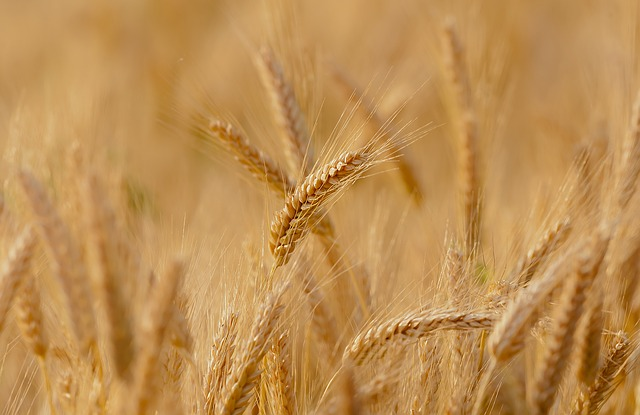В шесть раз горючее дороже пшеницы
