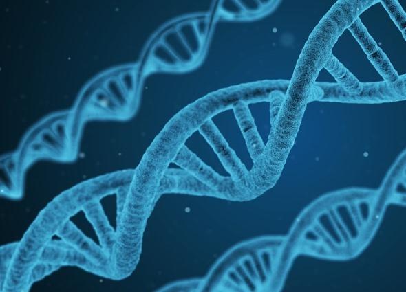 Цепочка ДНК, как оказалось, тоже подчиняется числу Пи.