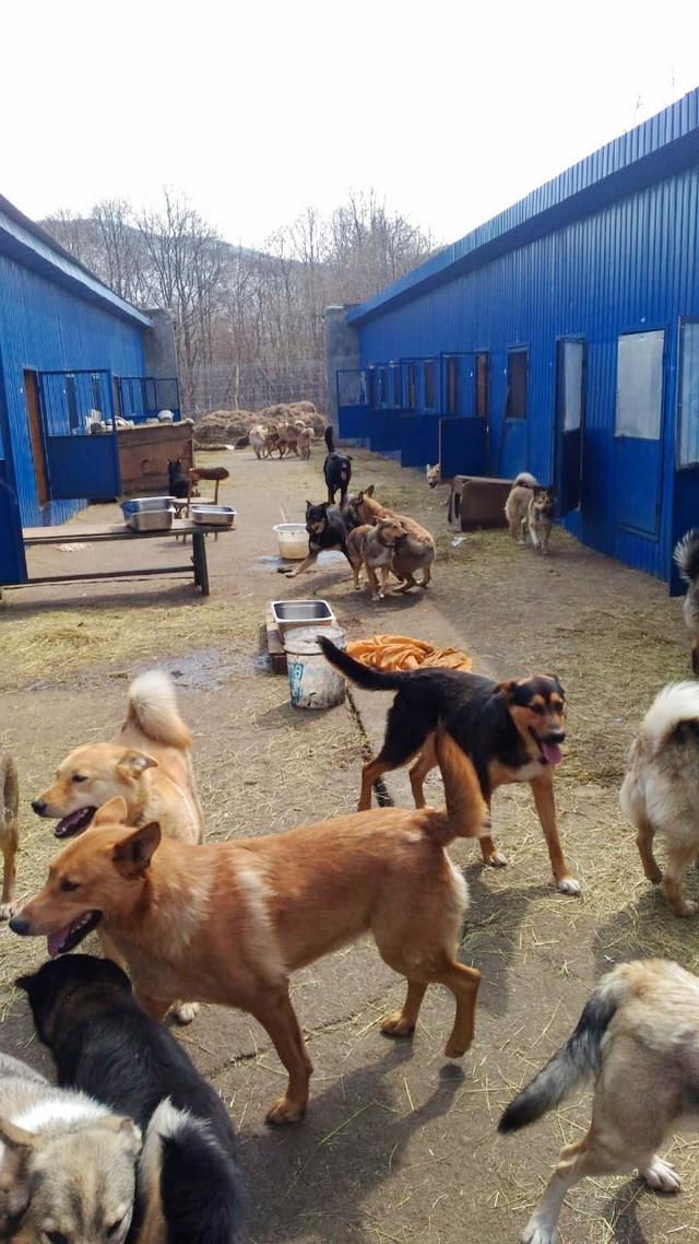 В приюте живут около 180 собак.