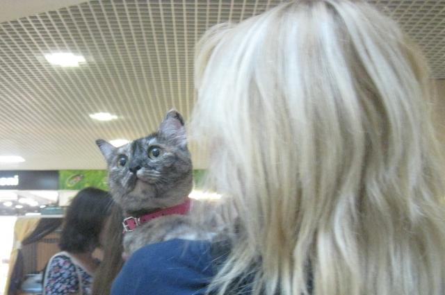 выставка кошек, беспородный кот