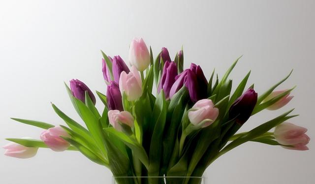 цветы, букет, тюльпаны