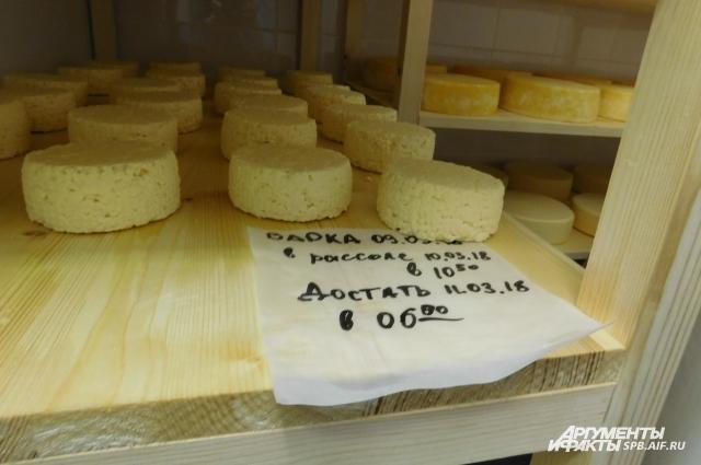 Этот сыр скоро можно будет подавать к столу.