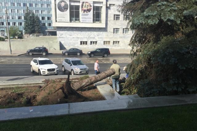 Несколько деревьев обрушилось напротив КДЦ.