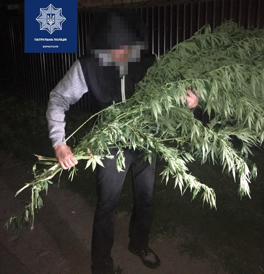Выход с одного куста конопли марихуана цена в москве