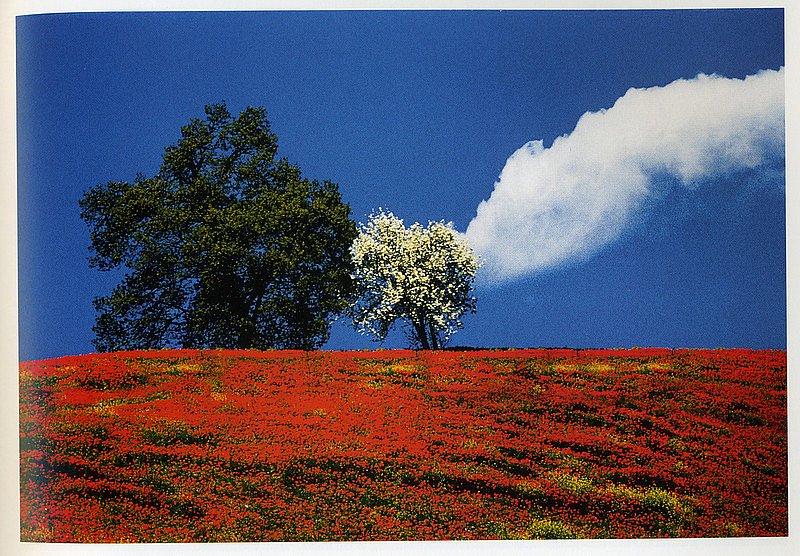 Итальянского фотографа Франко Фонтано считают мастером цветной пейзажной фотографии. Его пейзажи Тосканы гармоничны и насыщенны, напоминают картины, а не фотографии. Его первые выставки начались в 1961 году, и их количество уже перевалило за 400.