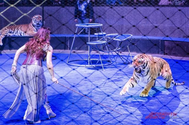Цирк дрессировщица Новосибирск