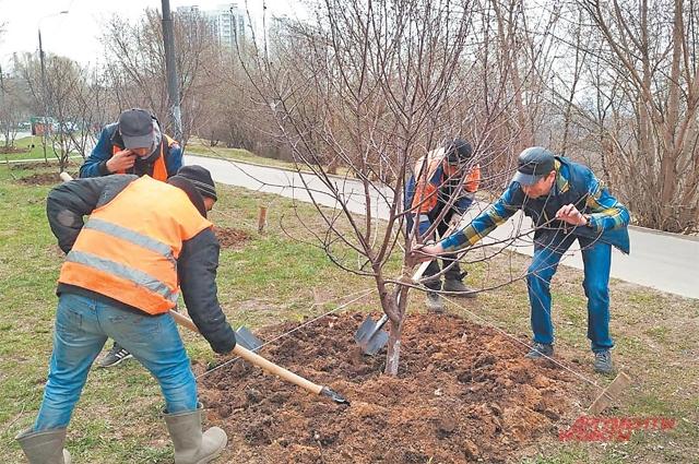 В рамках акции «Миллион деревьев» в районе высадили 113 деревьев.