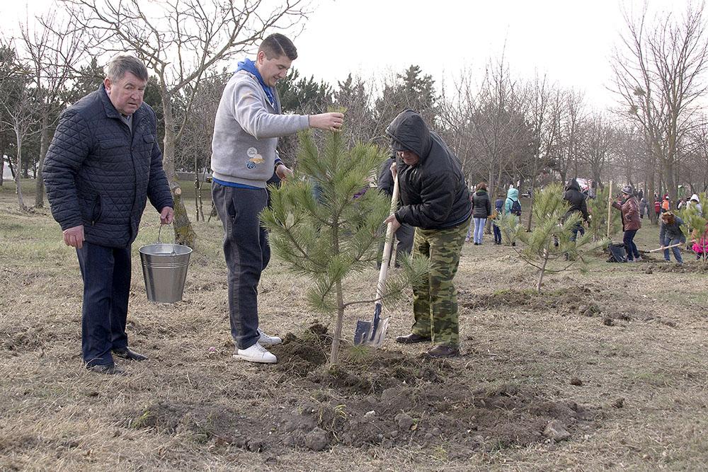 Высадка деревьев в рамках акции «Сад памяти»