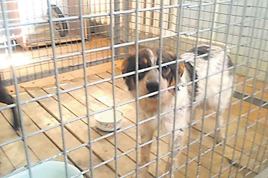 Отловленные собаки должны содержаться в пансионате не менее 6 месяцев.