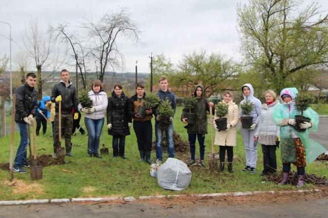 к 80-летию Ростовской области высадили голубые ели.