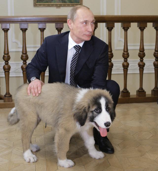 Владимир Путин и Баффи - собака, подаренная болгарским премьером Бойко Борисовым.