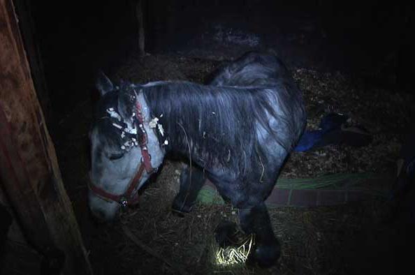 Лошади были сильно истощены.