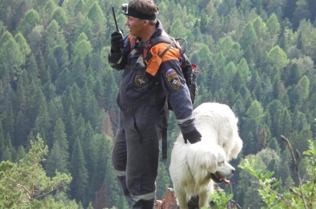 Пик рабочей формы собаки-спасателя - 3-6 лет, а всего пёс живёт около 12 лет.