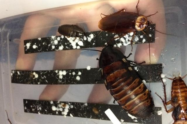 С некоторыми насекомыми смоляне смогли познакомиться вживую.