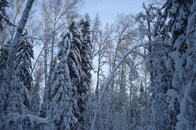 Лес в Муромцево.
